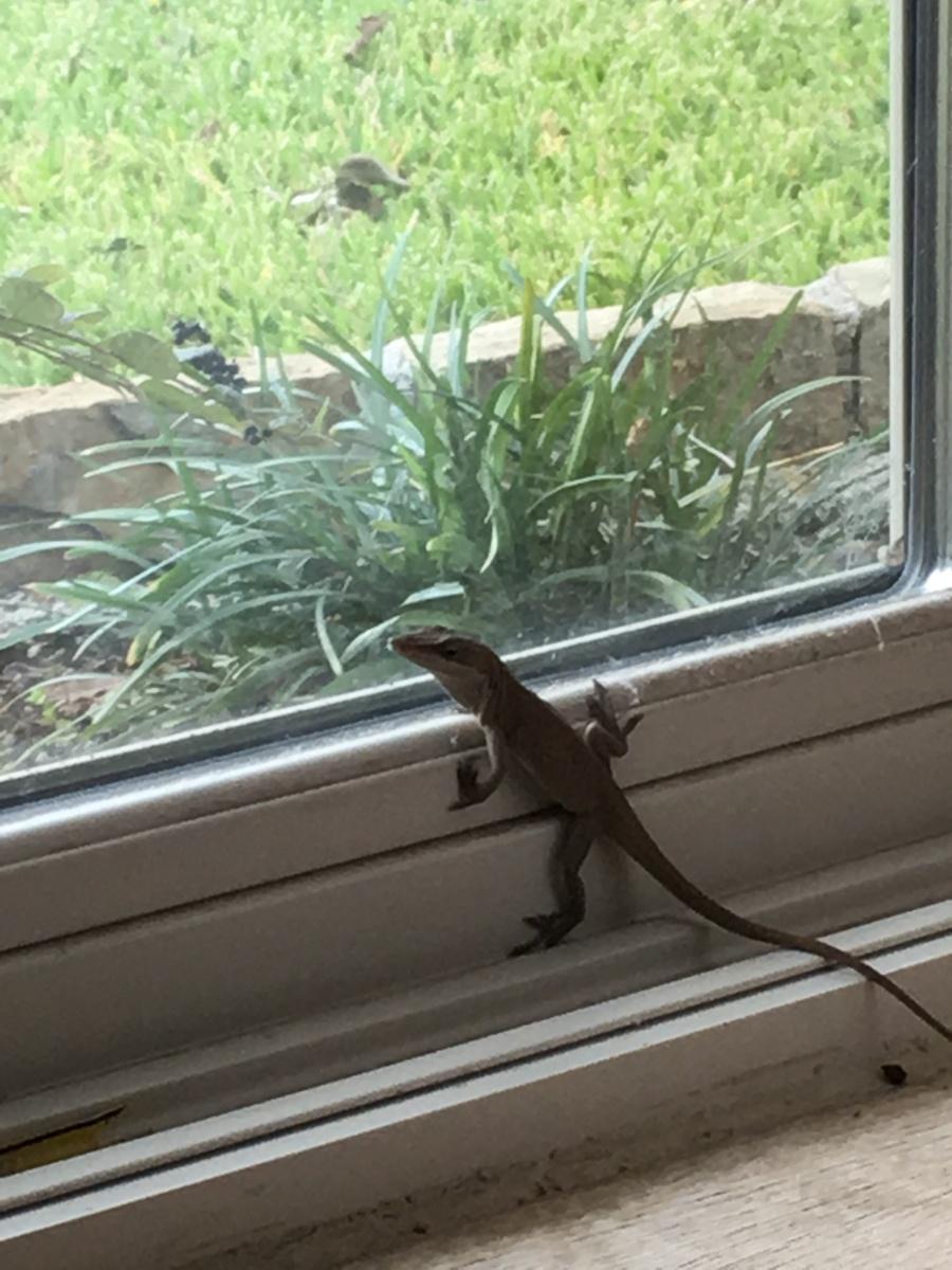 Lizard's Loose